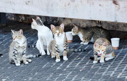gatti si perdono nella strada