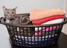 gatto-sopravvissuto-in-lavatrice