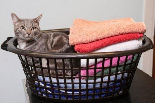 Il gatto sopravvissuto ad un lavaggio in lavatrice a 60 gradi