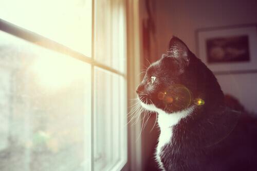 7 modi per capire se il vostro gatto è sordo
