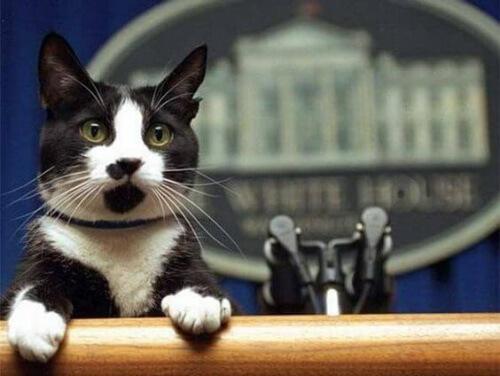 La giornata mondiale del gatto