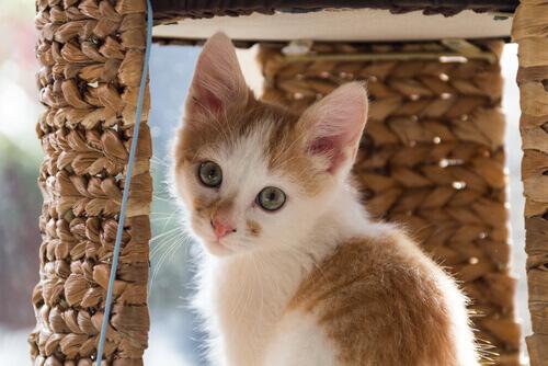 cucciolo di gatto bianco e marrone