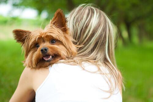 Come capire se il vostro cane vi ama alla follia