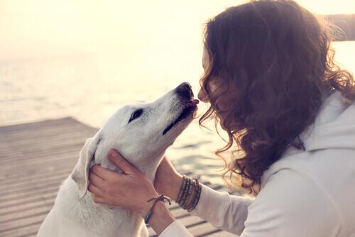 Le infezioni contraibili dando baci in bocca al cane