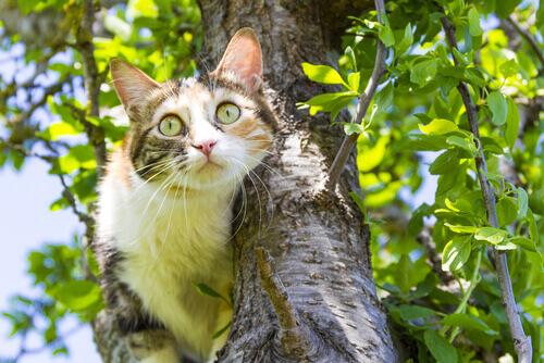 iperestesia-felina