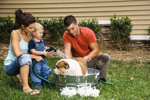 lavare-il-cane