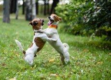 lotta-tra-cani