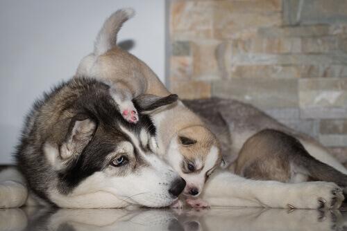 mamma-con-cucciolo