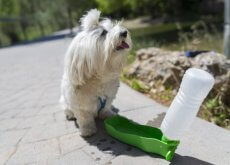 mangiatoia giocattolo cani