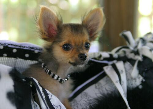 casting cani modelli
