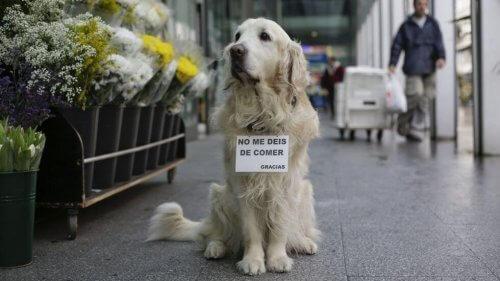 Ney, un cane che ricorderemo per sempre