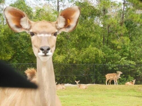 Un safari molto speciale con animali che hanno avuto una seconda possibilità