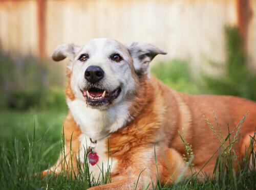 Come capire che taglia raggiungerà il vostro cane
