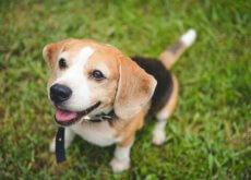 5 libri da leggere per capire il vostro cane