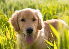 Adottate un cane e avrete molti più amici