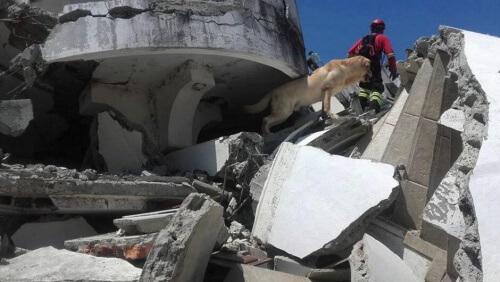 Cani da soccorso in Ecuador: un grande aiuto