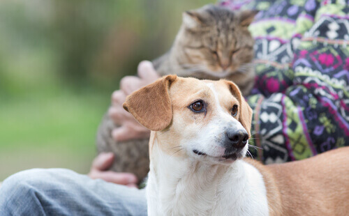 Cani per anziani: le migliori razze per la terza età
