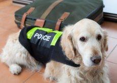 Cani segugio contro il riciclaggio di denaro