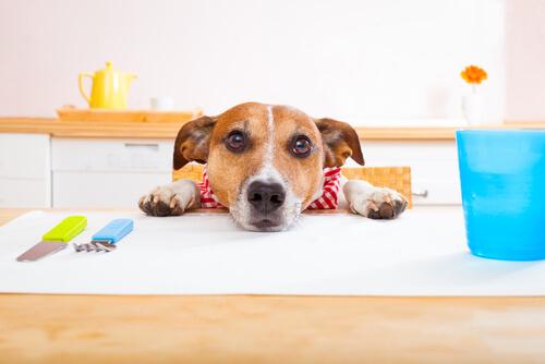Cani vegetariani, tutto ciò che bisogna sapere