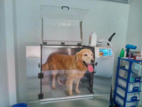 Come funzionano le lavatrici per cani