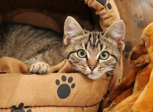Come insegnare al gatto a dormire nella cuccia