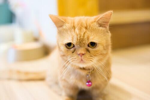 Come respirano i gatti? In 9 modi differenti