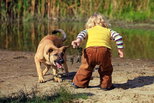 Cosa fare se vostro figlio ha paura dei cani