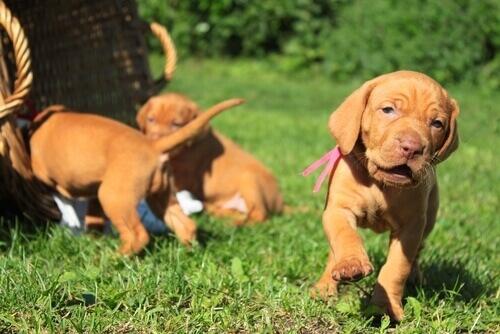L'importanza della socializzazione nei cuccioli