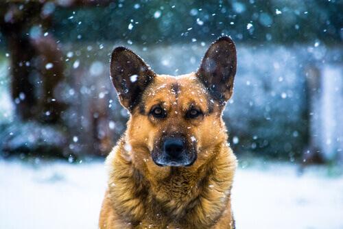 Come divertirvi con il vostro cane in inverno
