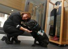 Cani nei tribunali, daranno sostegno ai testimoni