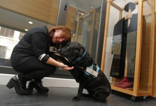 Cani nei tribunali per dare sostegno ai testimoni