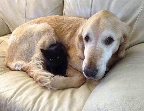 Fosberg: il cane che perse il suo amico gatto, ma trovò un nuovo compagno