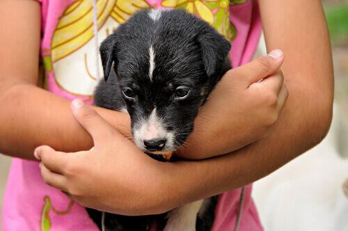 Giochi per insegnare ai bambini a prendersi cura degli animali