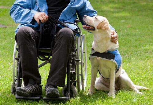 I cani migliorano la vita di molte persone