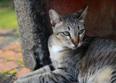 I gatti, animali da compagnia molto indipendenti