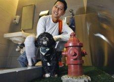 I primi bagni per cani e gatti arrivano negli aeroporti