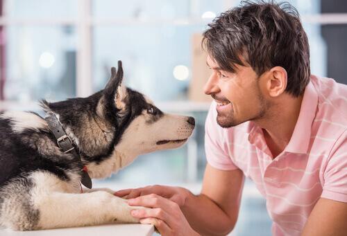 il-cane-puo-ricordare-ogni-cosa-che-gli-avete-fatto