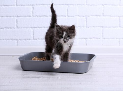 Il gatto non usa la lettiera: ecco cosa fare
