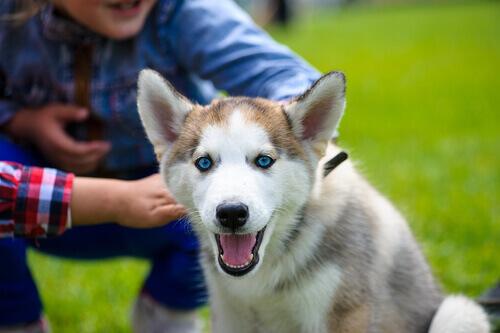 Cosa fare se il vostro cane non si fida di voi