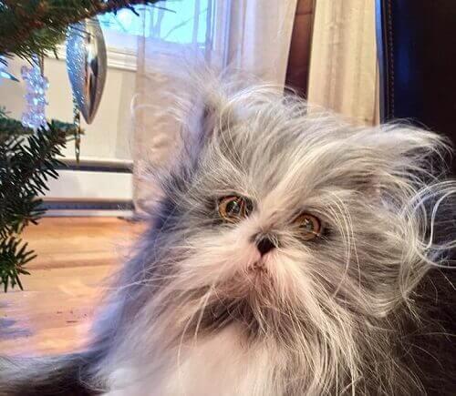 Indovinate che tipo di animale è questo: gatto o cane?