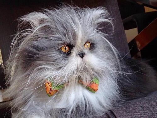 Indovinello: questo animale è un gatto o un cane?