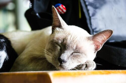Insegnare al gatto a dormire nella cuccia