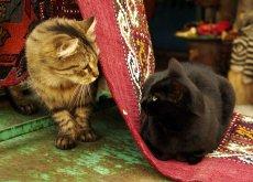 La moschea che accoglie i gatti abbandonati