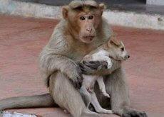 scimmia e cane