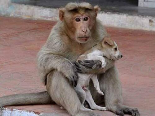 La scimmia che ha adottato un cane randagio