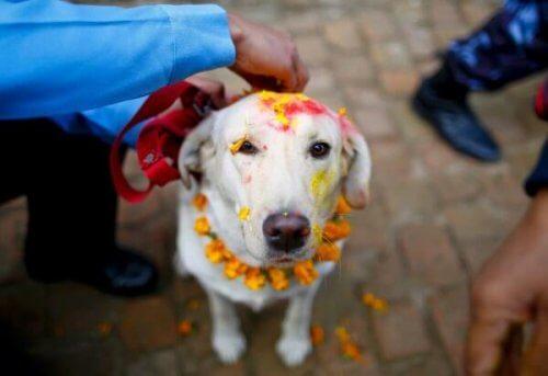 Le migliori feste dedicate agli animali in tutto il mondo