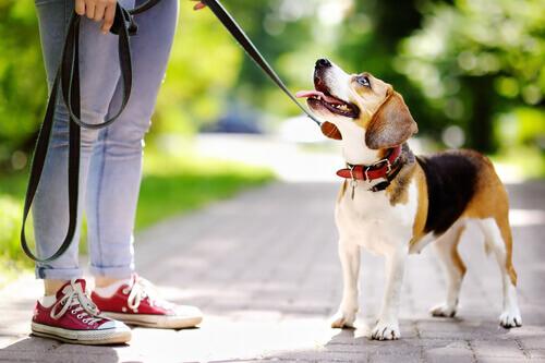 Motivazione, come sfruttarla per educare il vostro cane