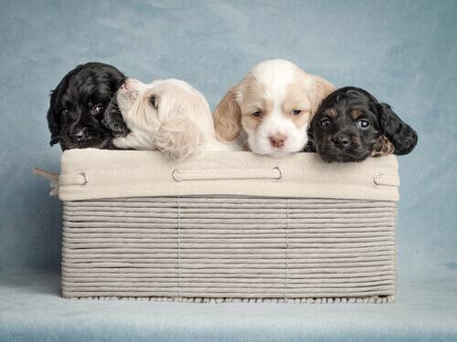 nome-ideale-per-il-cane