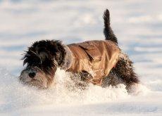 Perché ai cani piace la neve