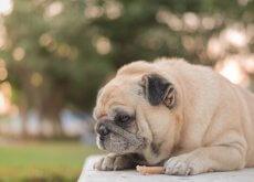 Perché i cani mangiano di meno in estate